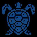 tortue de mer beaulieu watersport